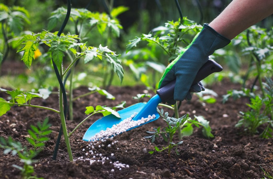 Концентрации удобрений для овощных культур