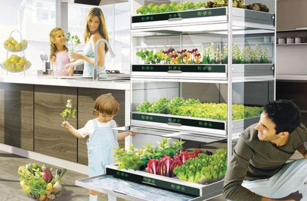 Огород в квартире. Что можно вырастить дома?