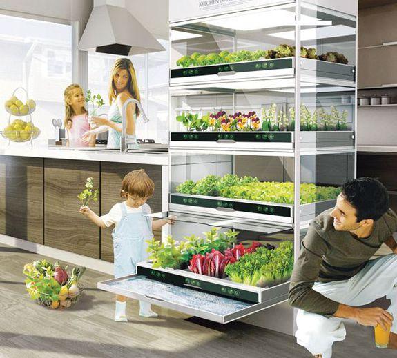 тем Выращивание зелени в квартире круглый год Смотрите