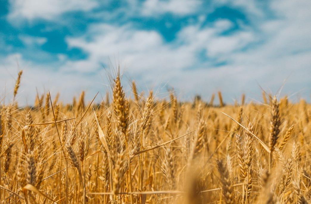 4 февраля в Волгограде откроется Всероссийский агрофорум