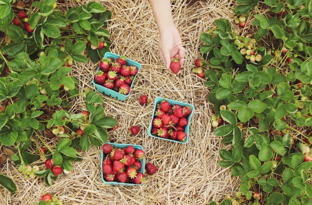 Эксперт рассказал секрет правильной подкормки дачных растений в июне