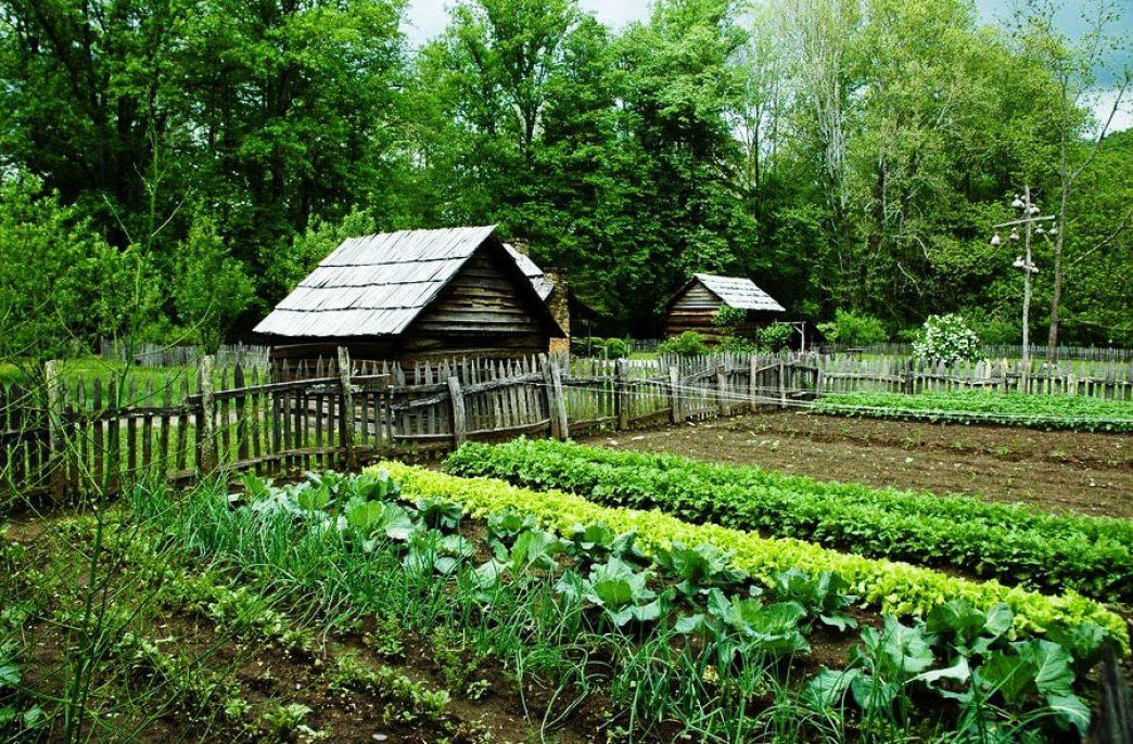 Мёд, зола и варенье: Какие натуральные удобрения используют в огороде?