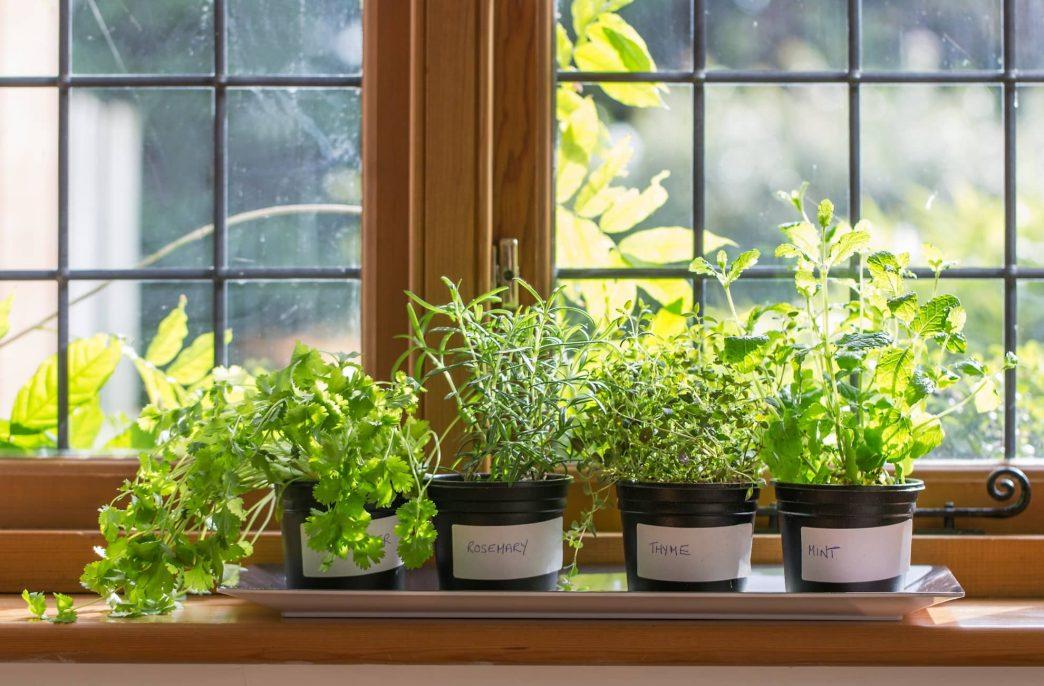 Какие овощи и фрукты можно вырастить в квартире?