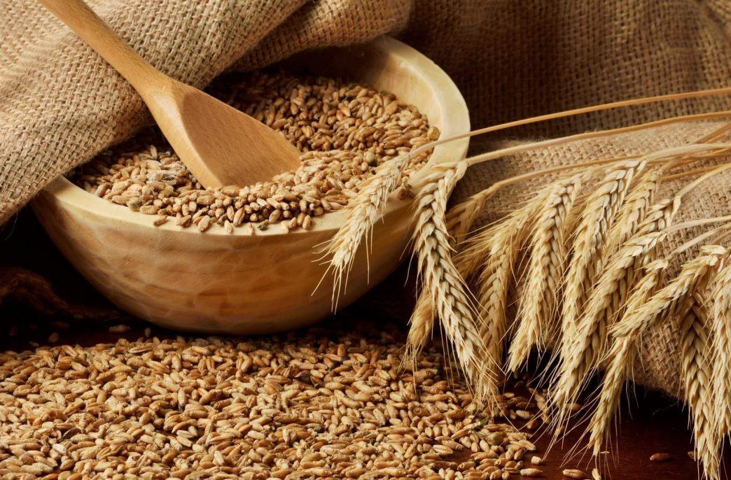 Ценообразование на рынке зерна получит прогнозы от экспертов