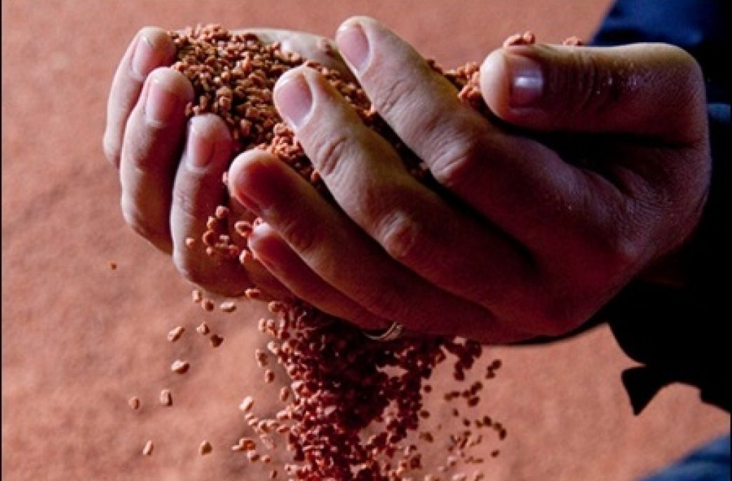 Беларусь в январе-июле сократила экспорт калийных удобрений на 21,4%