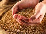На Ставрополье при помощи безводного аммиака повышают урожайность