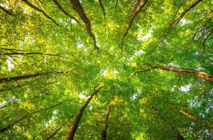 «Единая Россия» предложит включить прилегающие к Битцевскому лесу территории в состав «зеленого пояса»