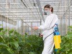 В теплицах под Хабаровском обнаружили превышение пестицидов