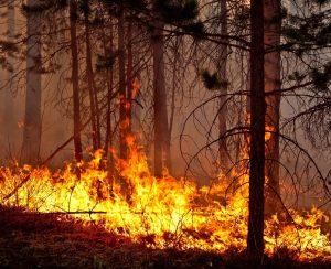 Изменение климата обострило пожарную обстановку в лесах Красноярского края