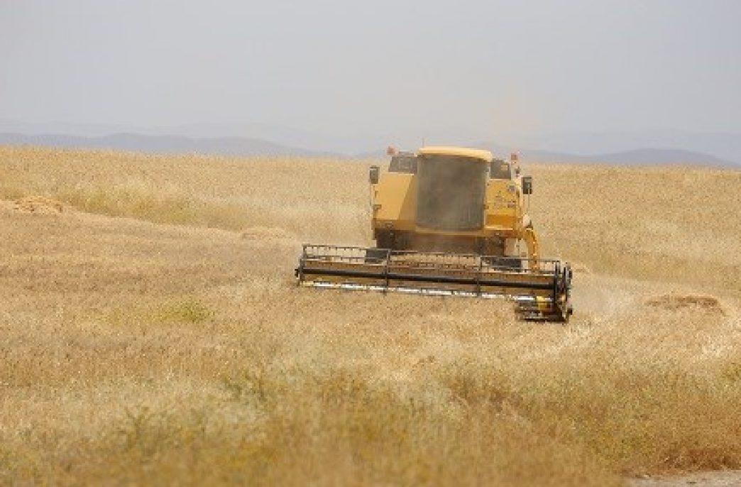 750 тонн удобрений для иракских фермеров