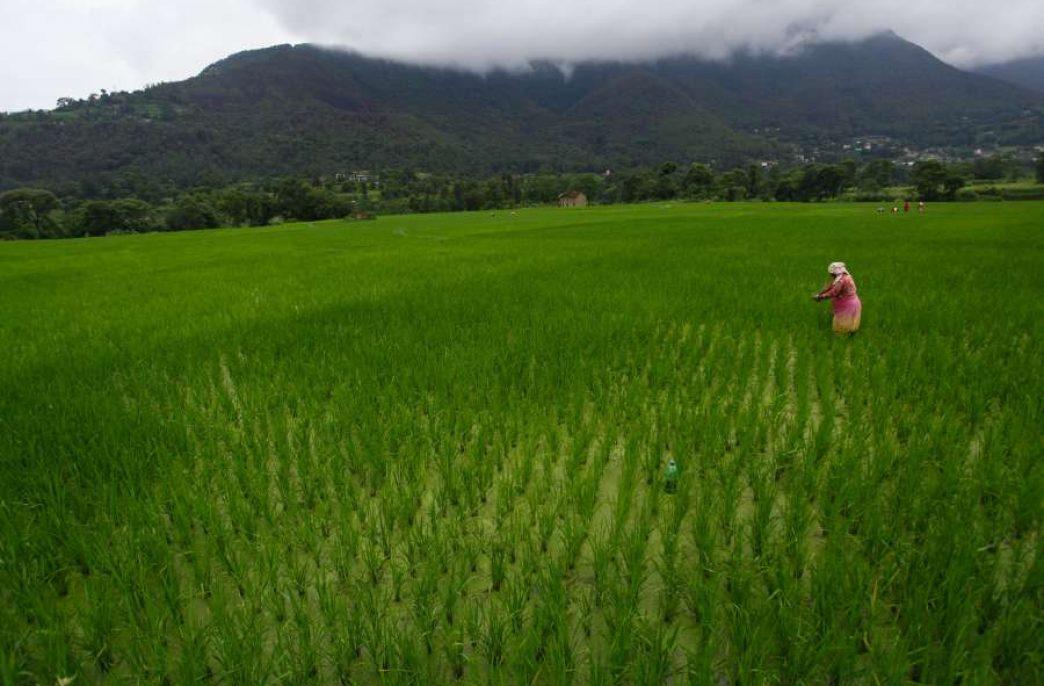 Новое «зеленое» удобрение может привести к революции в пищевой промышленности