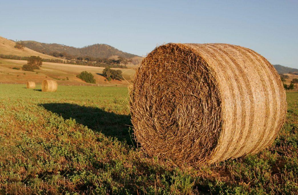 Нужно ли учитывать стоимость нутриентов при расчете цены на сено?