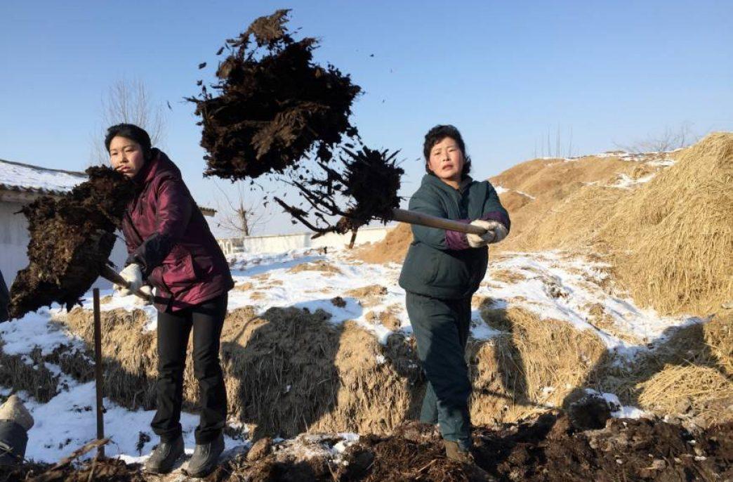 «Удобрения чучхе» повысят урожайность в Северной Корее