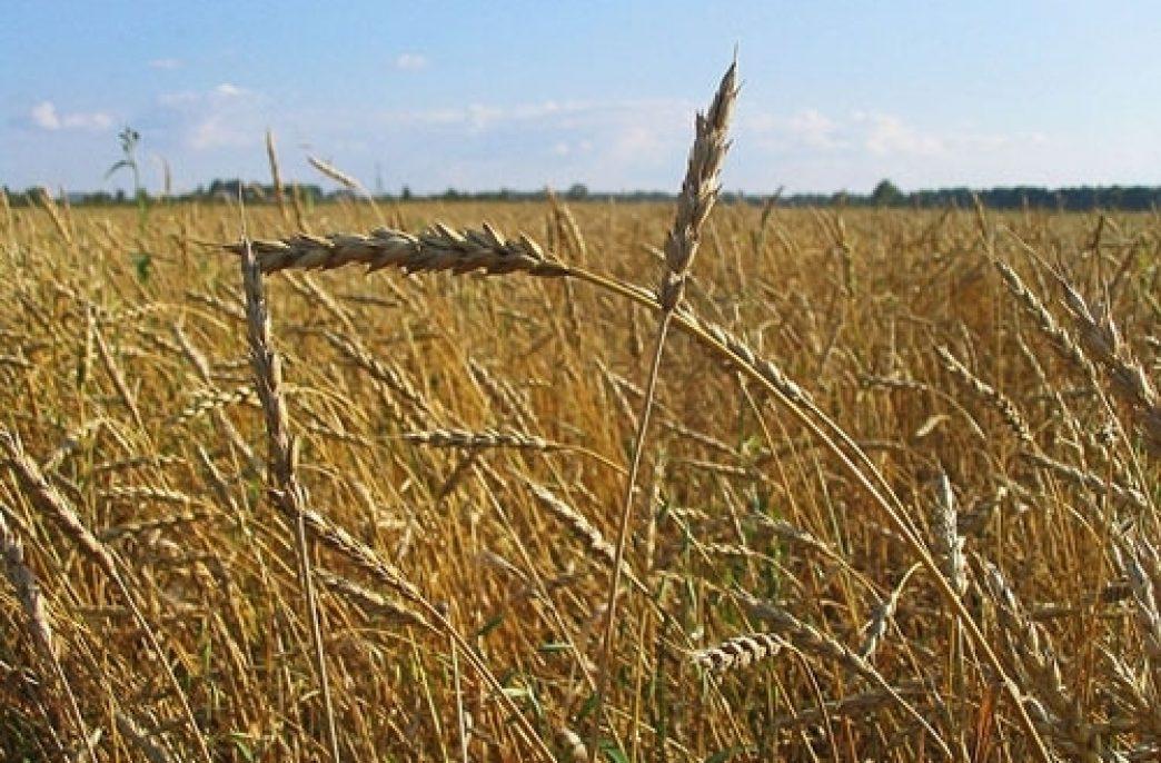 Агрохолдинг «Мрия» приступил к полевым работам
