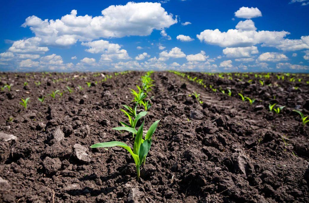 В марте в США начнет работать новый завод по производству удобрений на основе навоза