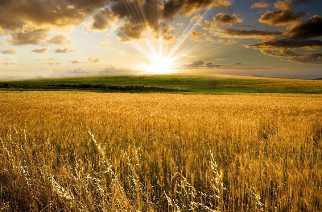 Минсельхоз снизил цены на удобрения на 10-20%