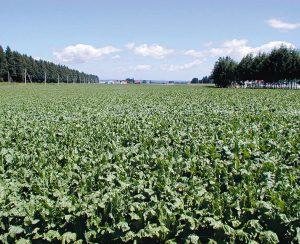 Как предупредить появление сорняков, устойчивых к гербицидам