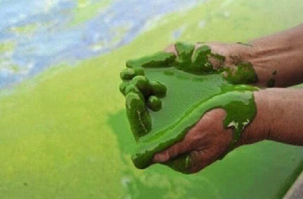 Подросток изобрел способ переработки и повторного использования нутриентов, загрязняющих водоемы