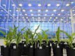 Искуственный интеллект в помощь семеноводству