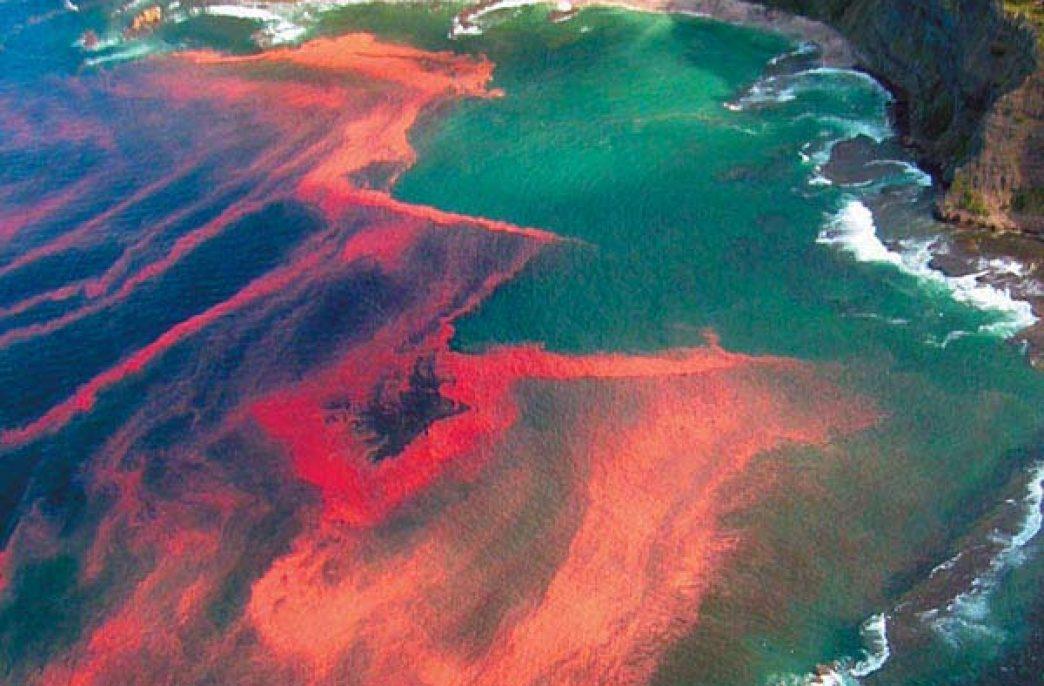 Экологи предупреждают об опасности токсичных азотных удобрений