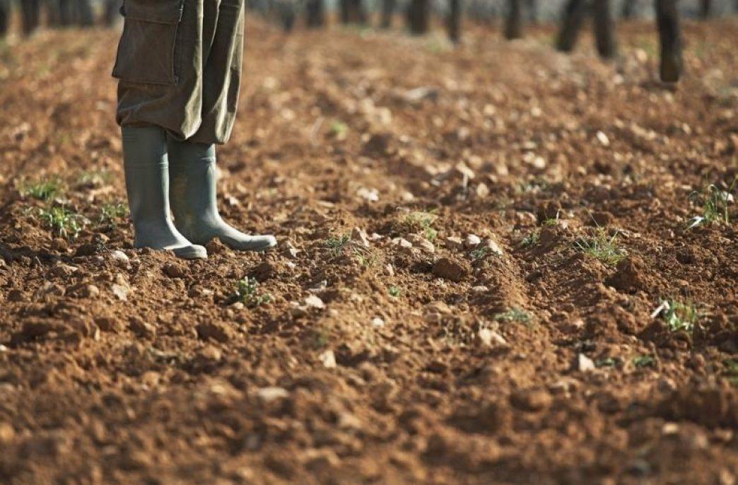 Ученые из ОАЭ разработали новый метод переработки осадка сточных вод в удобрения