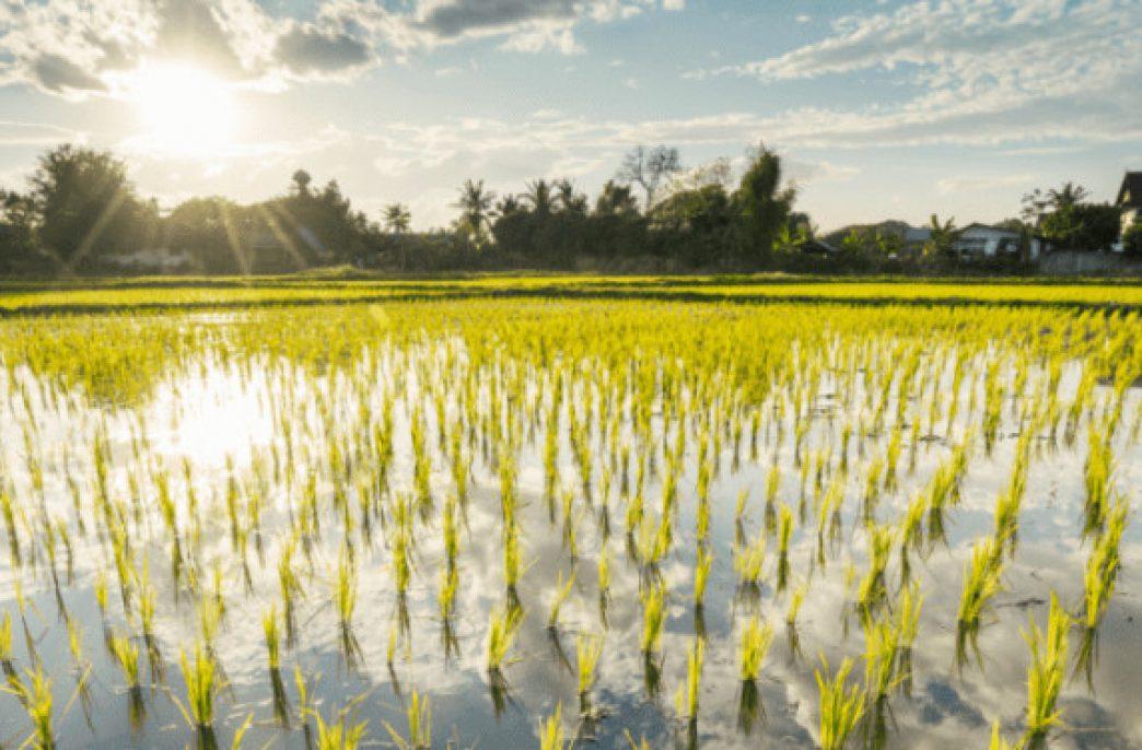 Можно ли использовать солнечную энергию для создания удобрений прямо в поле?