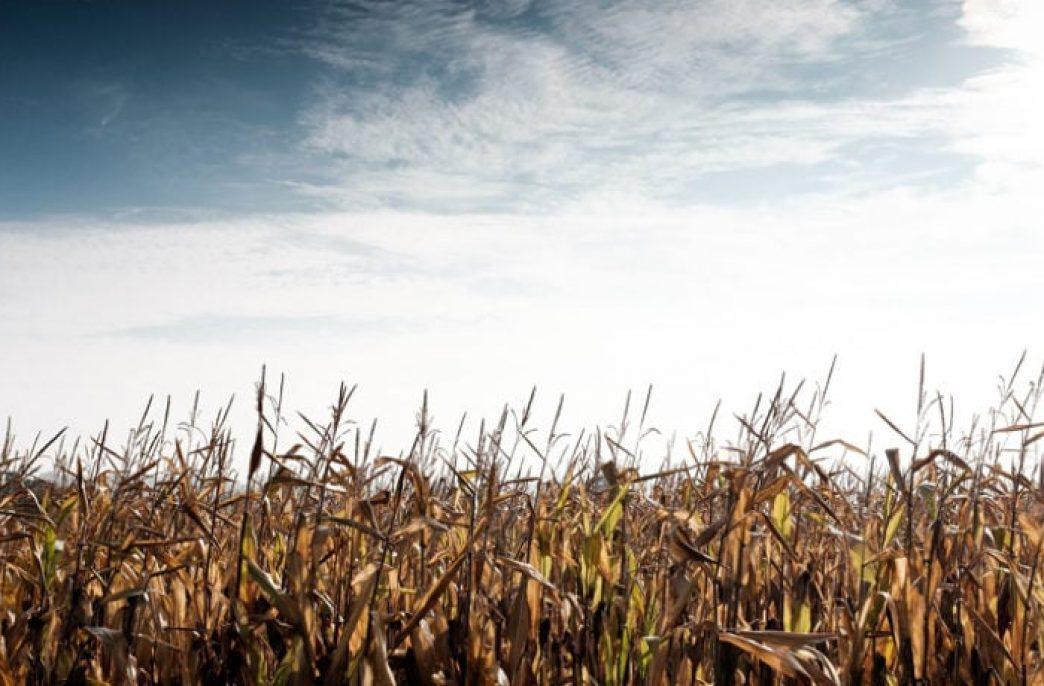 Yara International получила кредит в 150 млн. долл. на развитие сельского хозяйства в Колумбии, Бразилии и Замбии