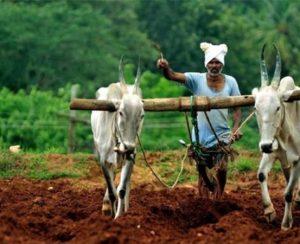 Индийский пенсионер наглядно показал преимущество органических удобрений