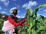 Правительство Нигерии предоставит фермерам 1 млн. удобрений по фиксированным ценам
