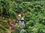 К 2020 году Китай намерен в два раза снизить использование химических удобрений