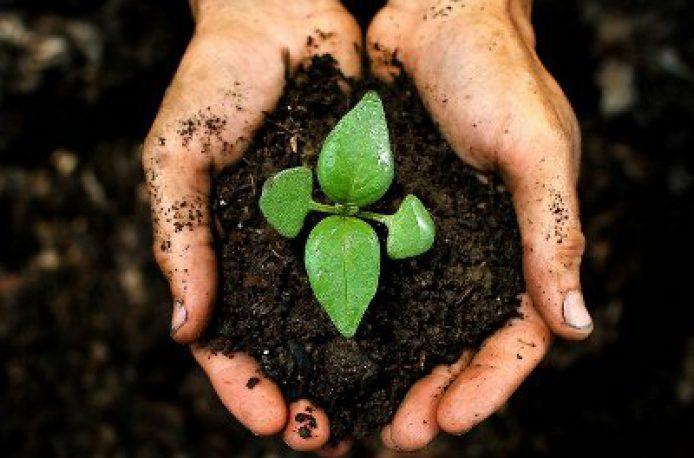 Армянская компания Agro IG планирует начать производство органических удобрений по новой технологии