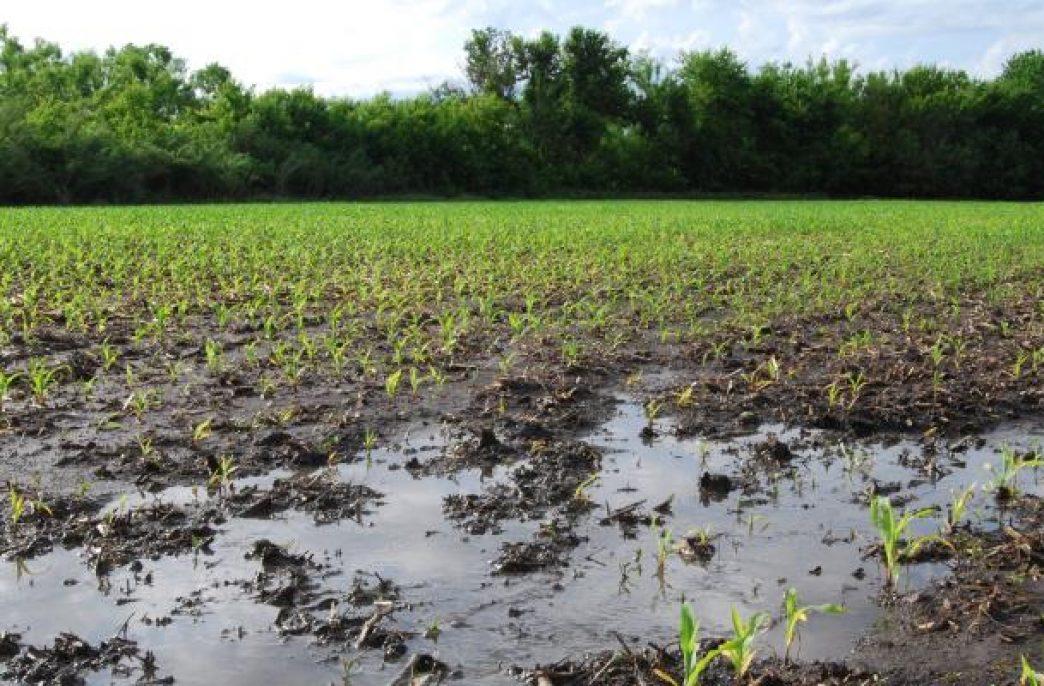 Внесение азотных удобрений весной — ключевые моменты