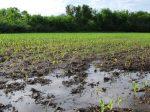Внесение азотных удобрений весной – ключевые моменты