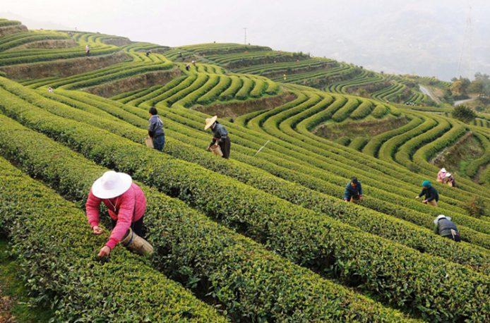 Китай разворачивает государственную программу по замене химических удобрений на органические аналоги