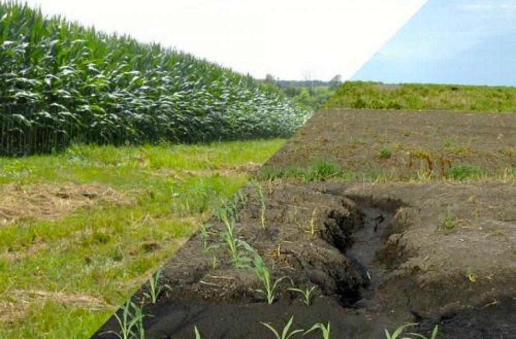 Нулевая обработка почв может быть решением для сельского хозяйства на Среднем Западе