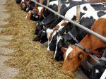Компания ADM Animal Nutrition изымает из продажи один из своих кормов, оказавшийся токсичным для животных