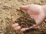 Исследователи из Университета штата Миссури исследовали урожайность глинистых почв