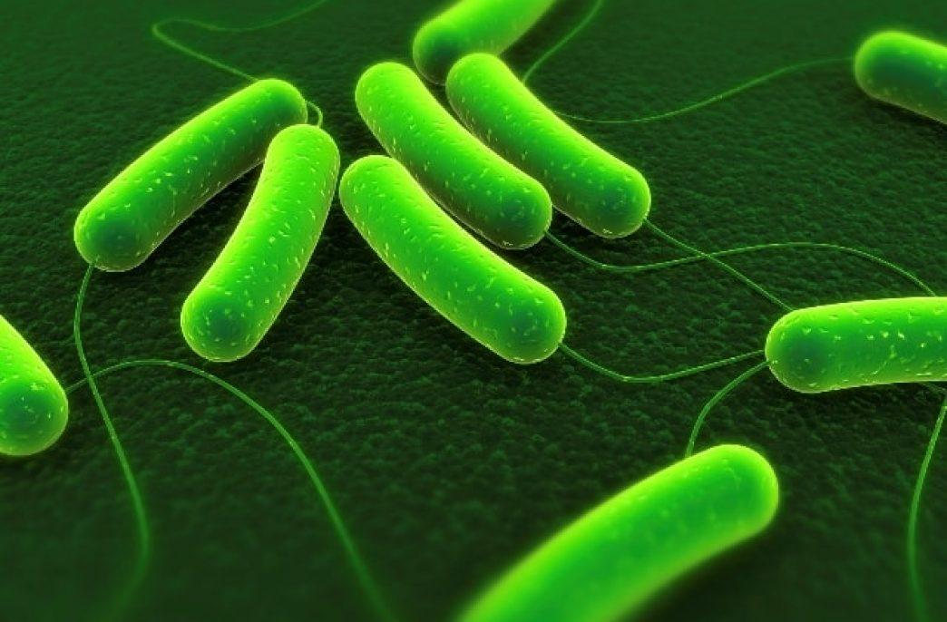 Как микроорганизмы изменяют сельское хозяйство