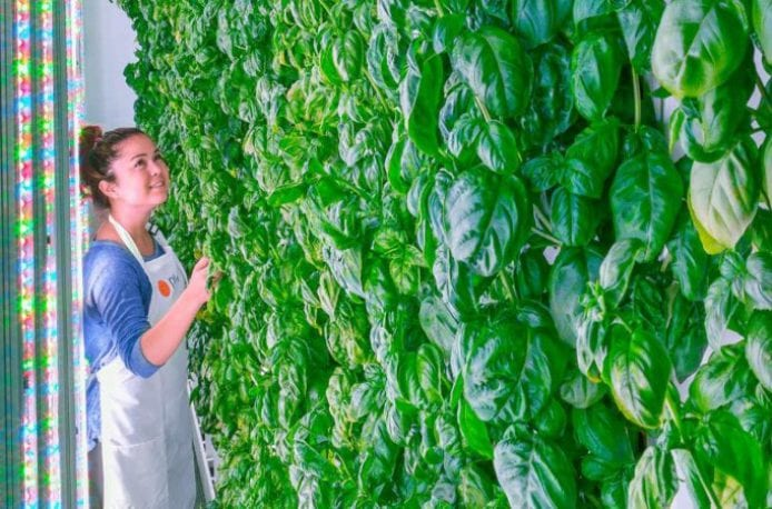 SoftBank Group инвестирует 200 млн. долл. в новый стартап по производству органических фруктов и овощей