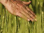 Технология «Интернет вещей» в сельском хозяйстве — повышение урожайности и снижение издержек