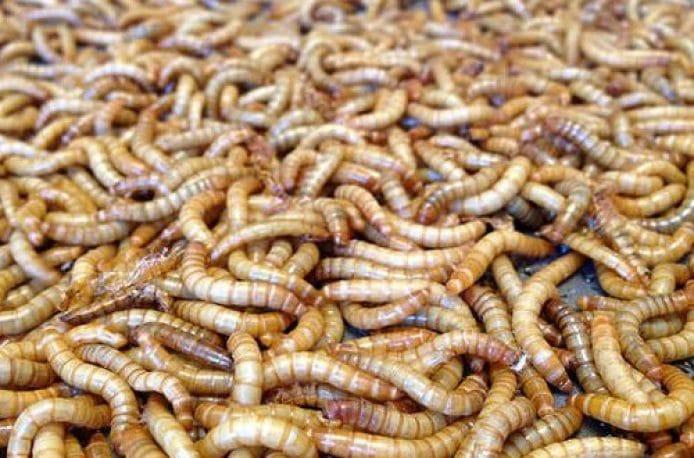 Новый стартап Beta Hatch – от мучных червей до удобрений и кормов для рыб и кур