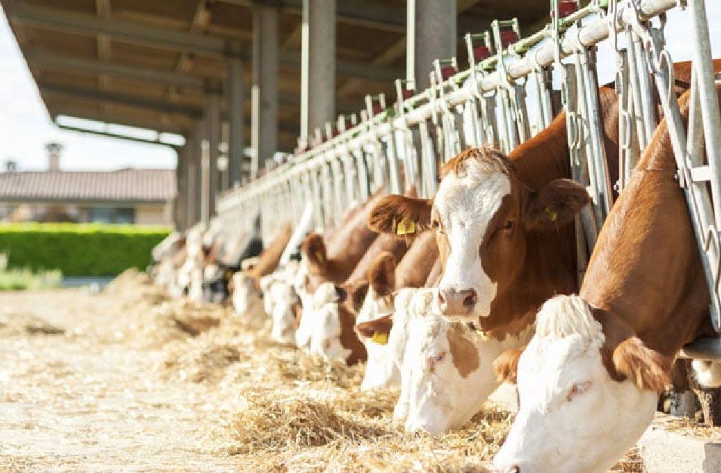 Немецкие ученые изучат вопрос повышения эффективности органического фосфора для домашнего скота