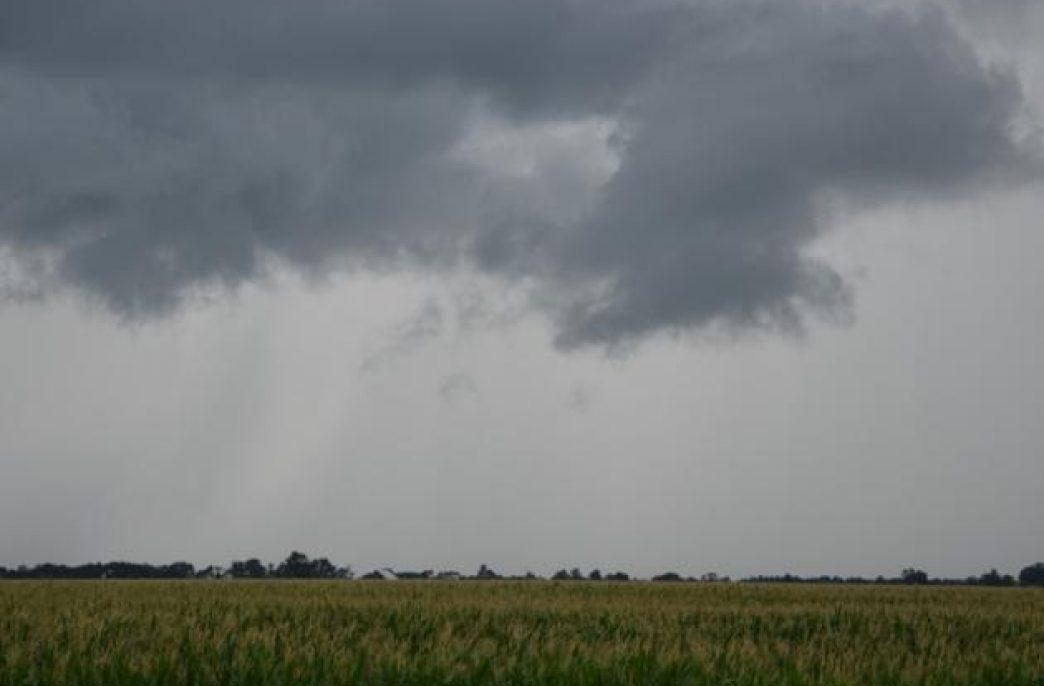 В Огайо обильные осадки угрожают кукурузным посевам