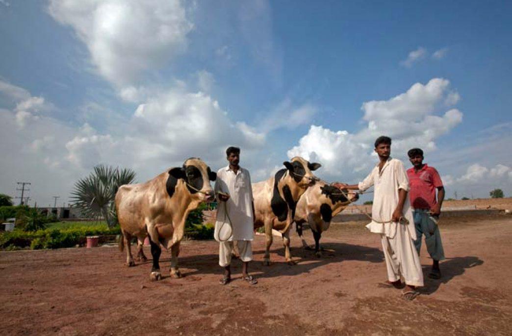 В Пакистане принадлежащая военным группа компаний Fauji ищет возможности удвоить свое присутствие на молочном рынке страны