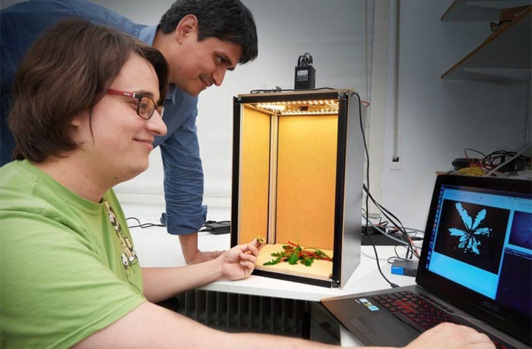 Уничтожение сорняков лазером — новое изобретение из Боннского университета