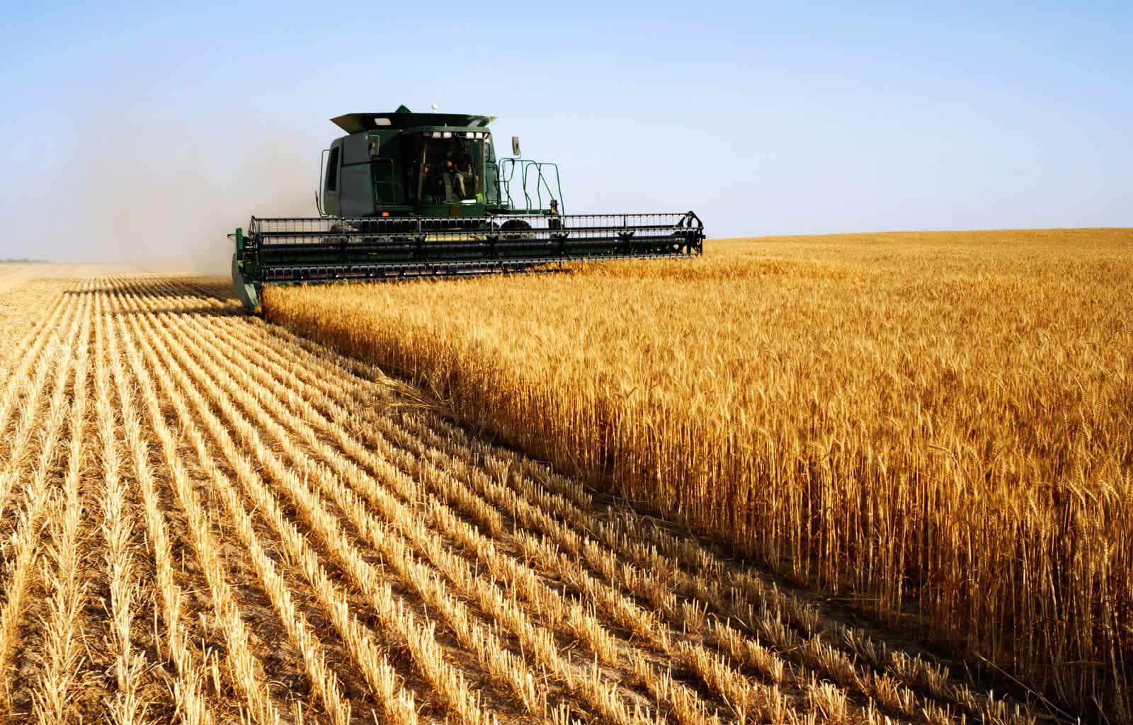 Картинки сельскохозяйственные, днем