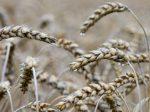 В Красноярске создано новое азотное удобрение с биоразлагаемым полимером