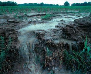 Национальный научный фонд США выделит 2,4 млн. долларов на создание энергоэффективного удобрения из сточных вод