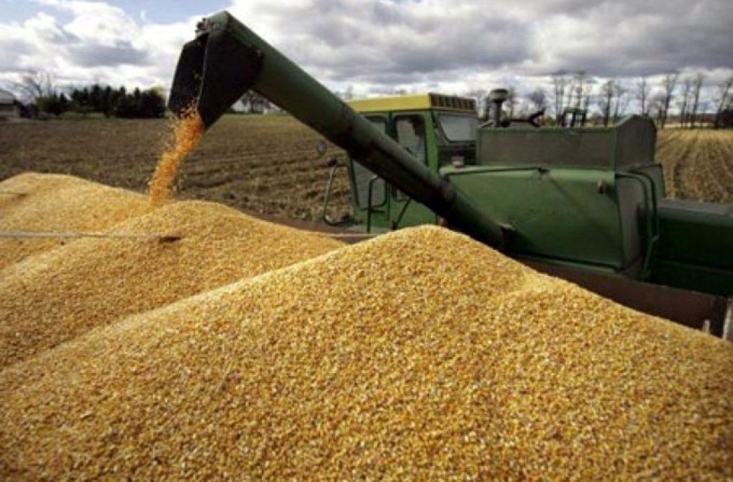 В Курганской области рекордный урожай зерна может смениться банкротствами и безработицей