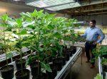 """Наноудобрения Aqua-Yield – большой эффект от """"самой маленькой инновации в сельском хозяйстве"""""""
